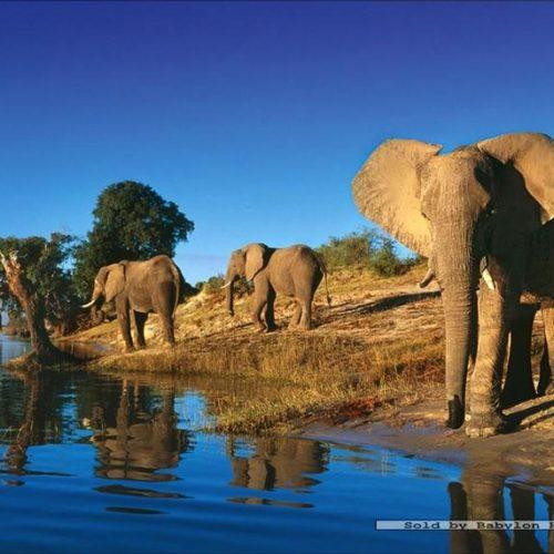 فیل های تشنه،پازل،Heye،1000 تکه