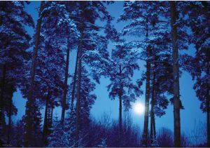 جنگل،جادویی،ماه کامل،هی،پازل،500تکه