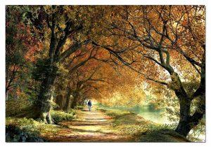 dominic davison forever autumn همیشه خزان 2000 ادوکا