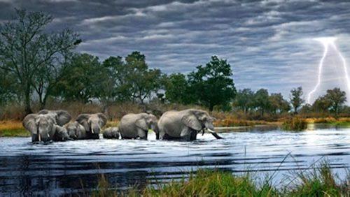 پازل هزار نکه گله فیل ها