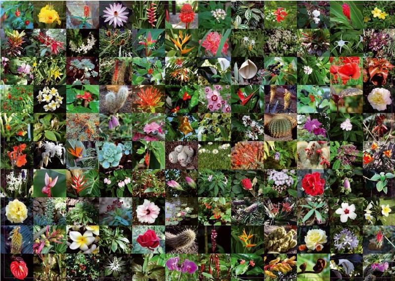 piatnik-flowers