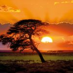 پازل ۱۰۰۰ تکه درخت آفتابی اثر نوربرت بکه